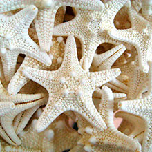 White star fish inspiration for Decora custom color match